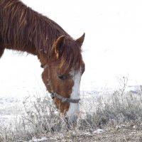 Просто конь :: Сергей Боярских