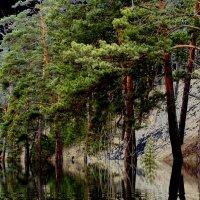 В лесу :: Татьяна Борзова