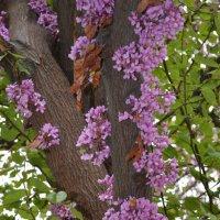 Tree :: Vana Harutyunyan