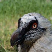 Птичка :: Agnivarshi Малтыз