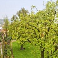 Салатовый сад :: vik zhavoronka