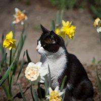 Весна и кошке приятна. :: Виталий Латышонок