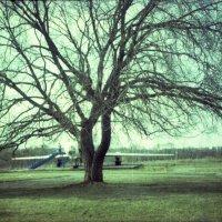Дерево, вариант № 1 :: Наталья Руссиян
