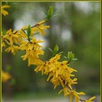 весна в цвету :: Татьяна Панчешная