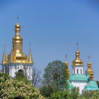 Киев, май, каштаны :: Olga F