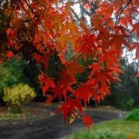 """""""Догорая в листьях осень..."""" :: viton"""