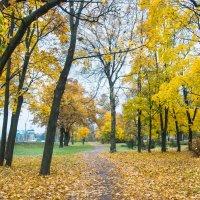 Пасмурный день золотой осени 1 :: Виталий