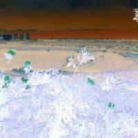 Зелёные бабочки зимы... :: Константин Николаенко