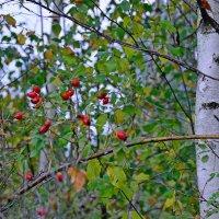 Осенние украшения :: Miola