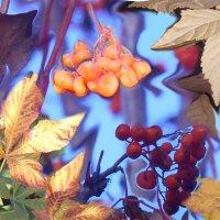 Осенний коллаж :: Татьяна Щёлкина