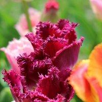 Бархатные цветы :: Виталий Терентьев