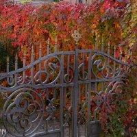 Ворота :: Dmitry Swanson