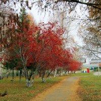 Рябиновый рай . :: Мила Бовкун