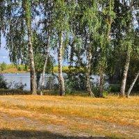 На берегу пруда :: Юрий Муханов