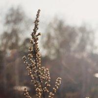 сухая трава :: n_p123 P