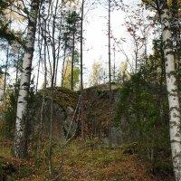 В лесу пос. Кузнечное :: Елена Павлова (Смолова)