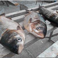 удачная рыбалка.... :: Юрий Владимирович