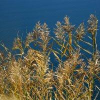 У озера :: Арина Минеева