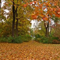 Золотая осень за окном  На холсте застыла в реверансе.... :: Galina Dzubina