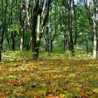 Осенний цветной ковер :: Милешкин Владимир Алексеевич