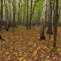 Приближаемся к экватору осени :: Андрей Лукьянов