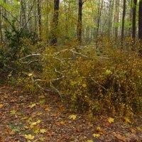 Падают не только листья, но и деревья :: Андрей Лукьянов