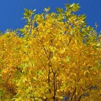 Золотая осень :: Арина