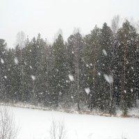 К нам уже пожаловала зима :: Наталья Пендюк Пендюк