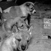 Думай-не думай, а жизнь собачья-грызи! :: Родольф В.