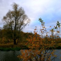Хмурый день октября :: Евгений Юрков