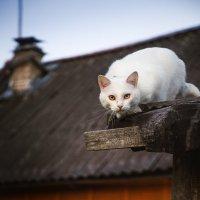 Грозный кот :: Наталья Вендт Фотограф&Дизайнер