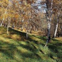 Островок зелени в осеннем парке... :: Александр Попов