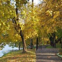 Золотая осень :: Анастасия Смирнова