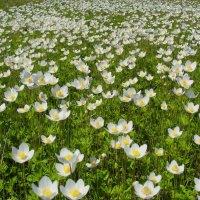 цветы полевые :: Владимир