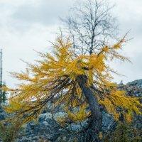Северная осень :: Евгений Виличинский