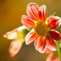Цветок :: Alex Bush