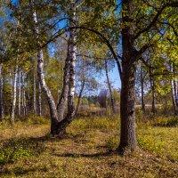 Под сенью осени :: Андрей Дворников