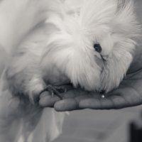 Птица мира :: Светлана Фомина