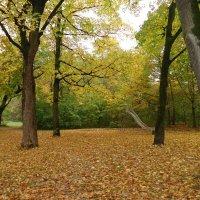 """""""Я ходила трогать осень за оранжевые ветки.  Мне под ноги  ветер бросил листьев желтые  монетки :: Galina Dzubina"""