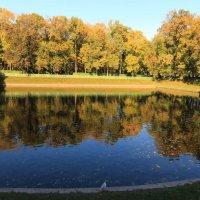 Осень в Летнем саду :: Вера Моисеева
