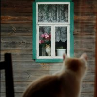 Наши окна друг на друга смотрят вечером и днём... :: Николай Масляев
