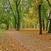 """Я любуюсь волшебною Осенью..."" :: Galina Dzubina"