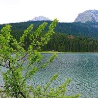 Черное озеро :: Стил Франс