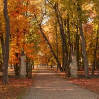 Осень в парке :: Александр Шалабай