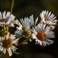 Хрустальные цветы. :: Владимир Фисенко
