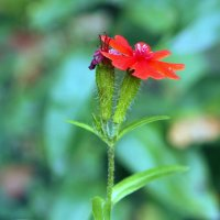 Кому-то цвесть,кому-то увядать... :: Александр Попов