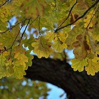 Осень :: Татьяна Симонова