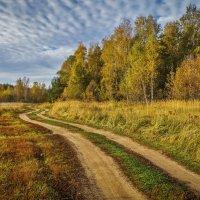 Цвет осени :: Андрей Дворников