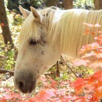 Золотая осень 5 :: Ingwar