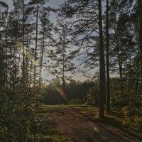 Прогулки по Валааму :: Alexandr Zykov
